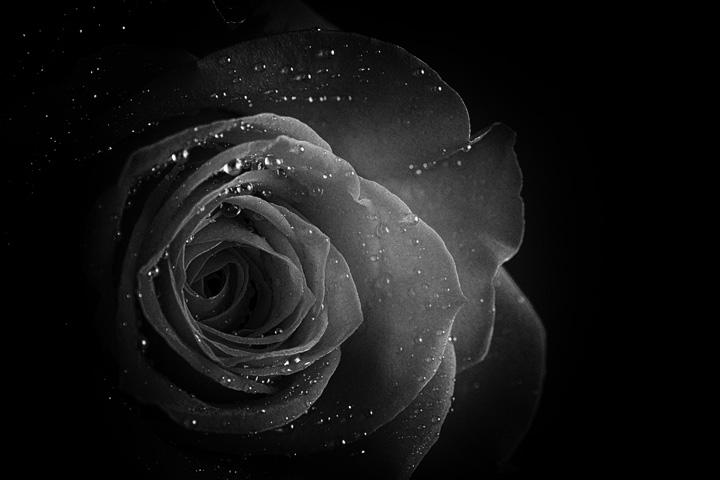 foto still life di fiori