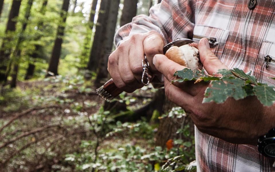 Andare per funghi tra i boschi di Lavarone